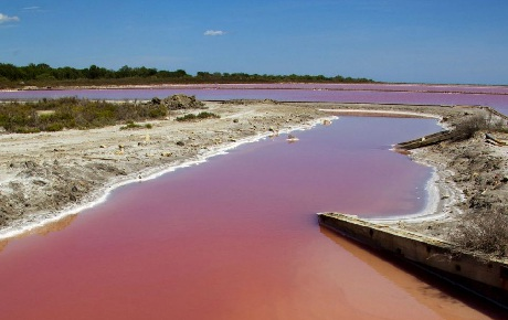 Hàm lượng muối cao trong nước sông chính là nguyên nhân tạo nên hiện tượng kỳ thú này