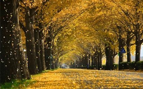 Con đường mùa thu 현충사 kéo dài ven sông đẹp nhất xứ Hàn