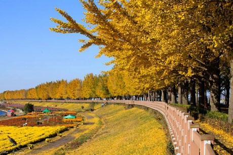 Lá rắc vàng trên con đường nhỏ men vào rừng