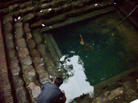 """""""Ông cá"""" bơi nổi trên mặt nước giếng."""