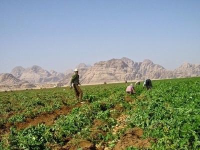 Những người dân làm việc trong trang trại ngay trên sa mạc…
