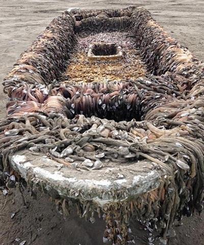 Con tàu bí ẩn trôi vào bờ biển bang Washington. (Nguồn: nydailynews.com)