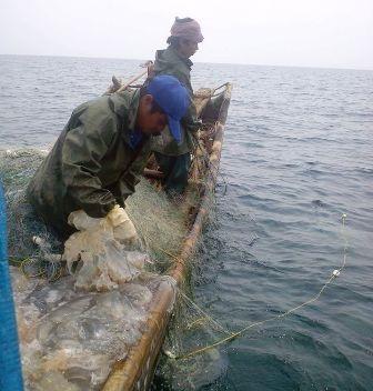 Nghề đi đánh bắt sứa trên biển của ngư dân xã Hoằng Trường, huyện Hoằng Hóa, Thanh Hóa