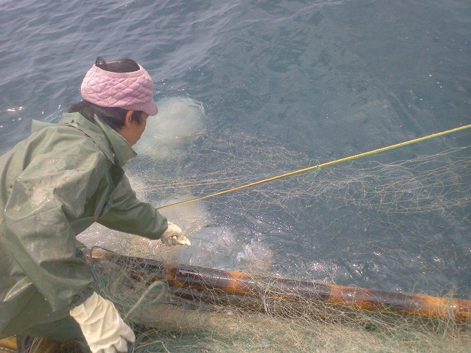 Thu nhập cao từ sứa, ngư dân gọi đây là nghề vớt vàng trắng trên biển