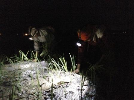 Trời tối om nhưng bà con nông dân vẫn hăng say cấy lúa cho kịp thời vụ