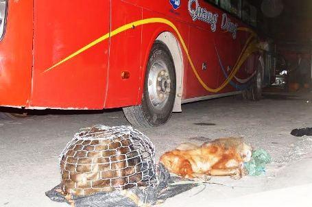 Các lực lượng chức năng phát hiện trong xe chứa 4 cá thể khỉ, trong đó, 2 cá thể đã chết.