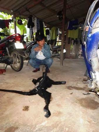 Đối tượng Đoàn Xuân Hòa bị bắt và khởi tố vì hành vi vận chuyển trái phép động vật quý hiếm