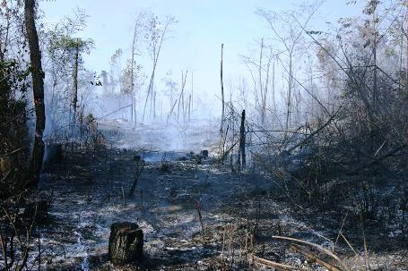 Hơn 7 ha rừng thực bì của Lâm trường Đồng Hới đã bị ngọn lửa thiêu rụi