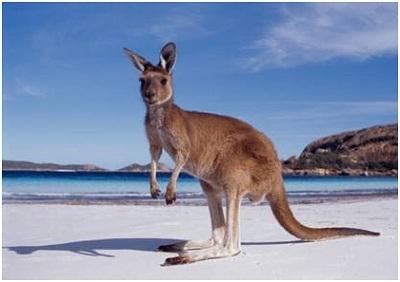 Du học Úc vào thời điểm này - Khó hay dễ?