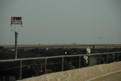 Tìm hiểu thịt bò dinh dưỡng theo phong cách Mỹ