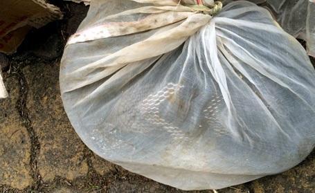 Chiếc xe khách chở cá thể rắn hổ mang chúa bị phát hiện.