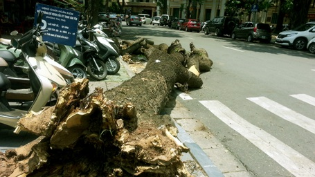 Cây đổ ra đường trên phố Quang Trung đã được cưa khúc nhưng bị bỏ lại dưới lòng đường.
