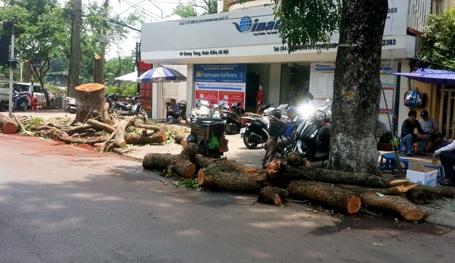Thân cây, cành cây lớn được cưa thành khúc, vứt ngổn ngang trên vỉa hè, lòng đường.