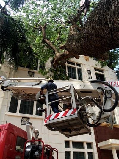 Một cây lớn chắn toàn bộ vườn hoa và vỉa hè phố Trần Nhân Tông chưa được cắt dọn.