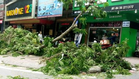 Dây cáp và cành cây bịt kín phía trước các cửa hàng kinh doanh.