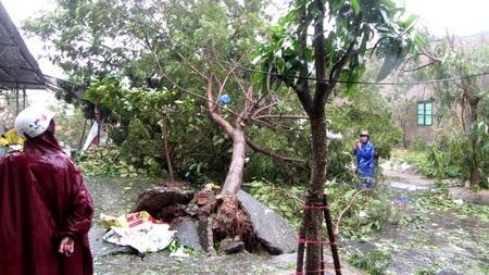 Có khoảng 40 ngàn cây xanh ngã đổ do bão số 11