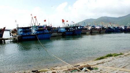 Các tàu cá đã vào neo đậu an toàn tại âu thuyền Thọ Quang (Sơn Trà, Đà Nẵng)