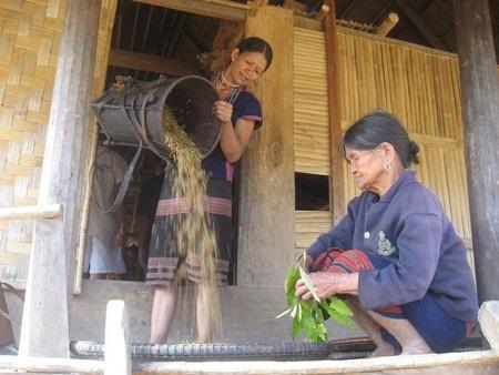 Lúa dùng nấu cơm được mang từ nương về làm sạch