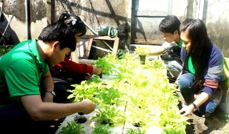 Các nhóm học hỏi dự án hỗ trợ nông dân nghèo thích ứng với biến đổi khí hậu tại Đà Nẵng