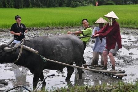 Du khách được hướng dẫn giữ thăng bằng để bừa ruộng
