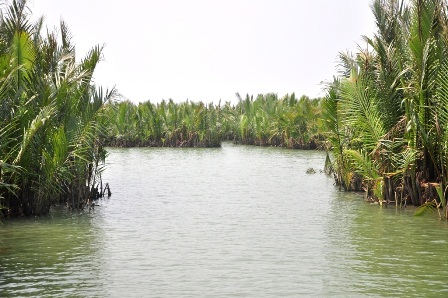 Khu rừng dừa với tên gọi Bảy mẫu xanh ngát nằm gần TP Hội An