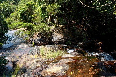 Những con suối ở thượng nguồn đổ về hồ