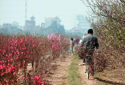 Hoa ở vườn thì đã nở, nhưng hoa chở đi bán lại ít người mua