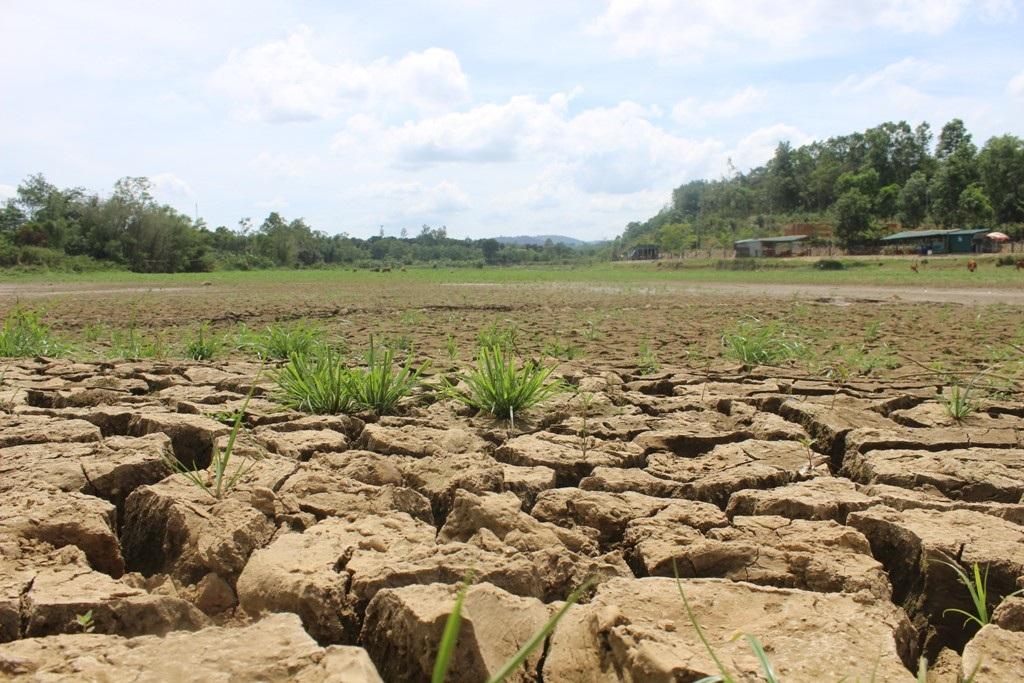 Chưa bao giờ người dân huyện Hướng Hóa phải đối mặt với tình trạng khô hạn khốc liệt như hiện nay