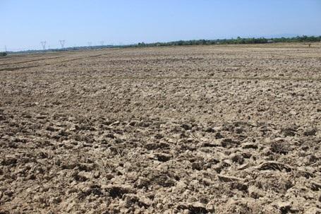 Nhiều diện tích đất nông nghiệp dù được người dân bỏ công cày xới nhưng không có nước để canh tác