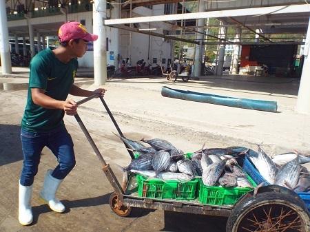 Ngư dân vận chuyển cá dưới nắng gắt.