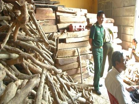 Kho gỗ không có giấy tờ hợp pháp bị phát hiện và đang chờ xử lý theo quy định