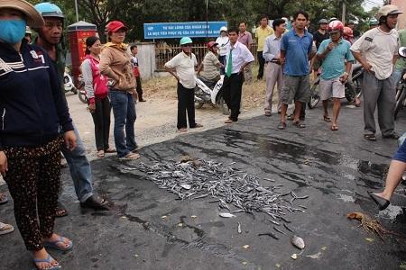 Người dân đổ cá chết để phản đối ô nhiễm.