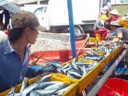 Cá nục được vận chuyển từ tàu thu mua lên cảng Hòn Rớ (TP Nha Trang) sáng 10/6.