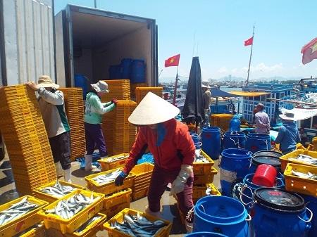 Cá nục được đưa lên xe đông lạnh chở đi các tỉnh lân cận tiêu thụ.