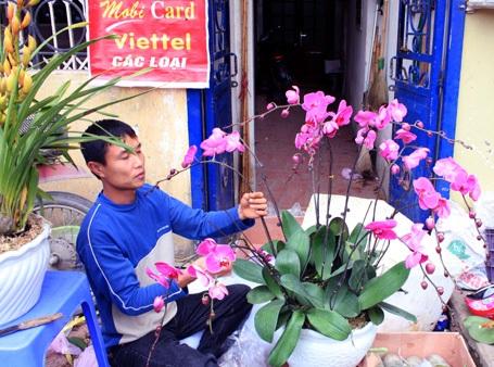 Hà Đông: Bán tháo hoa xuân - 3