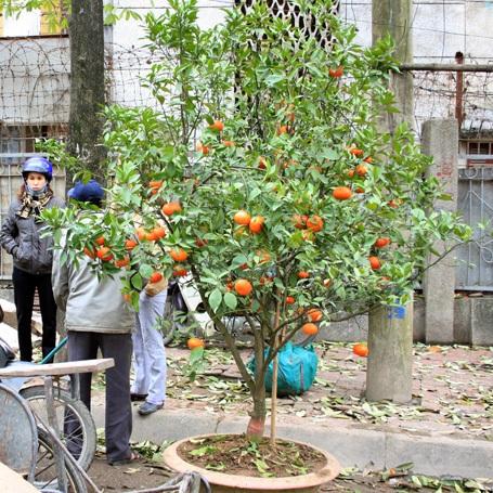 Hà Đông: Bán tháo hoa xuân - 2