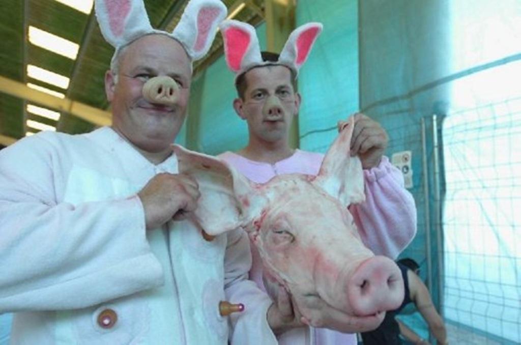 Họ phải giả tiếng kêu của lợn qua từng giai đoạn