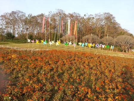 Đồi chong chóng với những lá cờ mang biểu tượng của miền Bắc Thái Lan