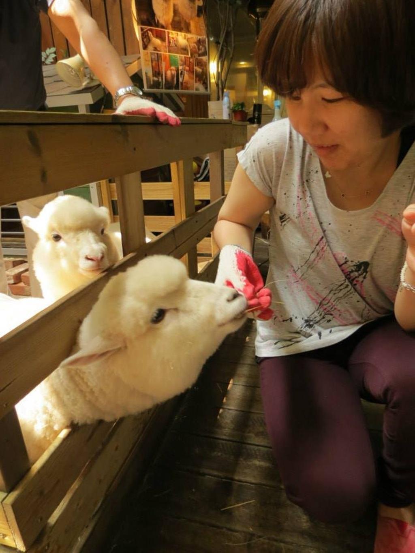 Khách cho cừu ăn