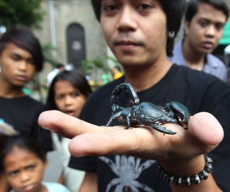 Allan Palaganas ở Manila, Philippines tự tin để con bọ cạp trên tay. (Nguồn: AP)