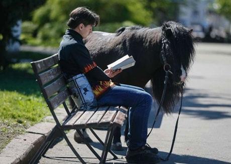 Chú ngựa ở Slaviansk, Ukraine. (Nguồn: Reuters)