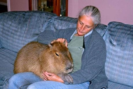 Melanie Typaldos ở Texas, Mỹ chơi đùa cùng chú chuột đáng yêu của bà. (Nguồn: Rex)