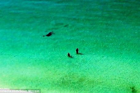 Con cá mập đã bất ngờ lao tới gần bờ
