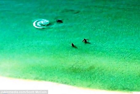 Hai du khách đang mải mê bơi gần bờ mà không hề biết đến sự hiện diện của con cá mập
