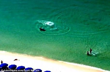 Một người bạn của hai du khách trên đã phát hiện ra con cá mập và hét lớn.