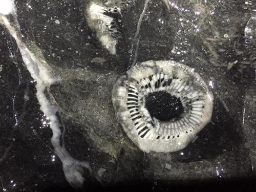 Đoàn làm phim tìm thấy một mẫu hóa thạch 400 triệu năm