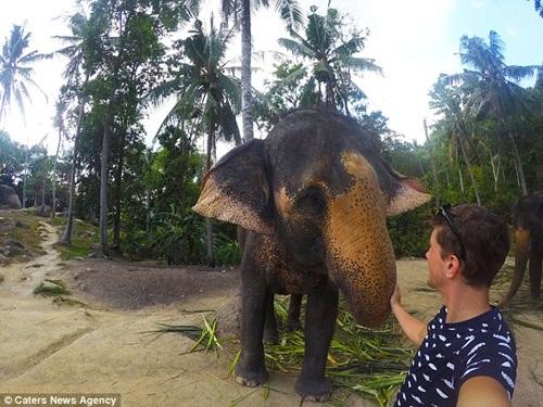 Được biết, chú voi giằng lấy máy ảnh vì muốn đòi thêm đồ ăn