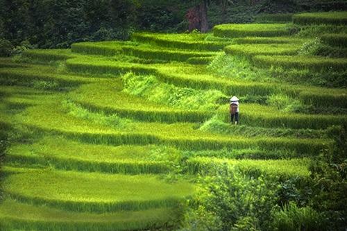 Hình ảnh thửa ruộng bậc thang được tác giả chụp gần Điện Biên Phủ