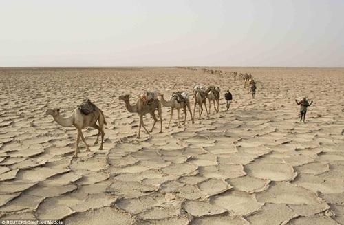 Đoàn lạc đà đi trên mặt đất nứt toác