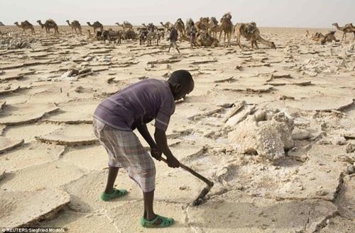 Cận cảnh khai thác muối thủ công của người Afar